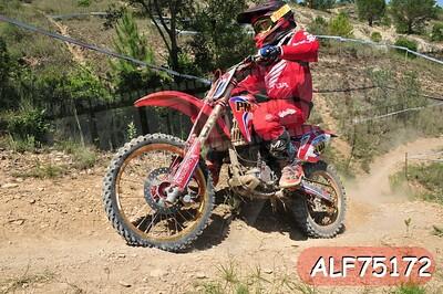 ALF75172