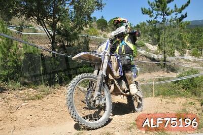 ALF75196