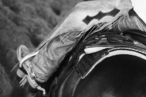 S. Alabama Stock Horse Jackpot