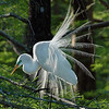 Great Egret<br /> First Place Winner in Nature<br /> By: Reese Hood 2007 Annual Competition
