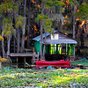 Caddo Lake Canoes<br /> Large Color<br /> 1st HM<br /> by Loleta Holley 2008 Annual Competition