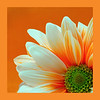"""'SUNSHINE DAISY""""<br /> by Marilyn Hammett<br /> Category:  Open Color<br /> 1st Place 2008 Annual Competition"""