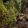 Oregon Gorge<br /> Open Color<br /> 2nd Honorable Mention<br /> 2009<br /> by Loleta Holley