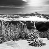 Timberline Ski Trail<br /> Monochrome<br /> 1st Place 2009<br /> Felix Laminen Award for best scenic monochrome-2009<br /> by Loleta Holley