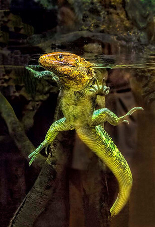 Pictorial, Second Honorable Mention - Dale Lindenberg - Lizard