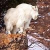 Wildlife, Third Place - Brian Buckner - Mr. Gruff