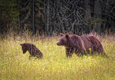 Wildlife, First Honorable Mention - Wayne Tabor - Hunting Lessons