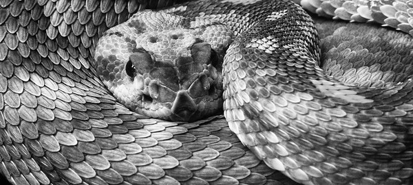 MONOCHROME/BLACK & WHITE: First Honorable Mention: Snake: by Dale Lindenberg: 16.8: