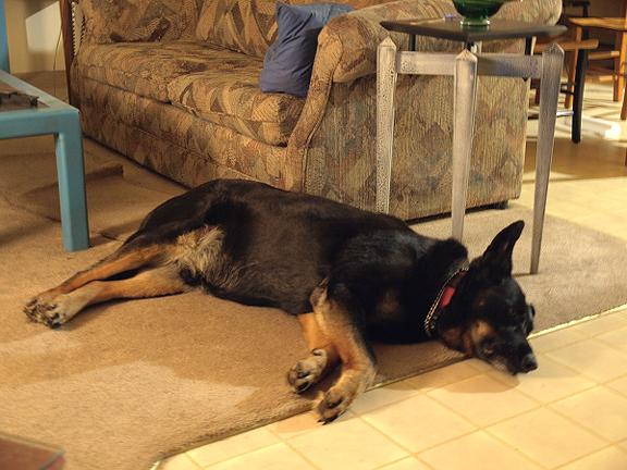Bliss, for a dog :) Don Kondra 25 April 2008
