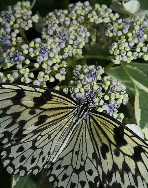 Butterfly Bliss by Viperman500 - taken on April 13th 2008
