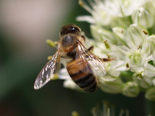mistermike The Pollenator
