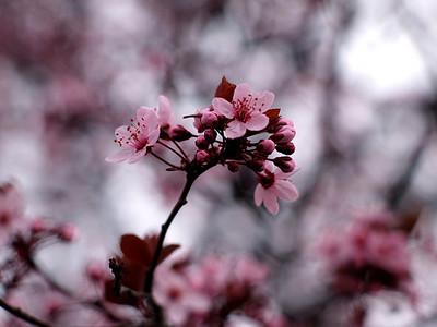 rkallen  First Signs of Spring