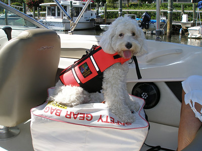 Even dogs need to practice boating safety. Charlie loves wearing his  lifejacket. OLYMPUS DIGITAL CAMERA