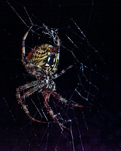 A_01_HuffJ_SpiderFromBelow_Sep13