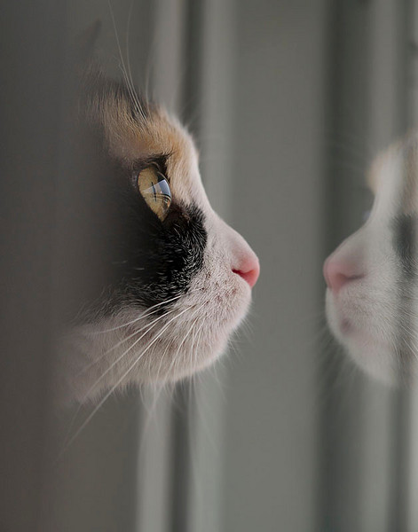 """#12 """"A cat's barrier, A photographer's barrier"""" BY VIPERMAN500."""