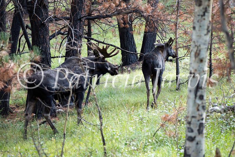 moose79C0975