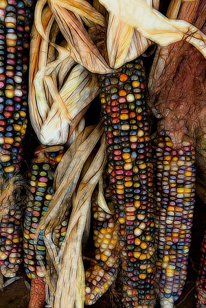Indian Corn, HM in Creative, N4C January 2017. HM in Best of the Best, N4C 2017.