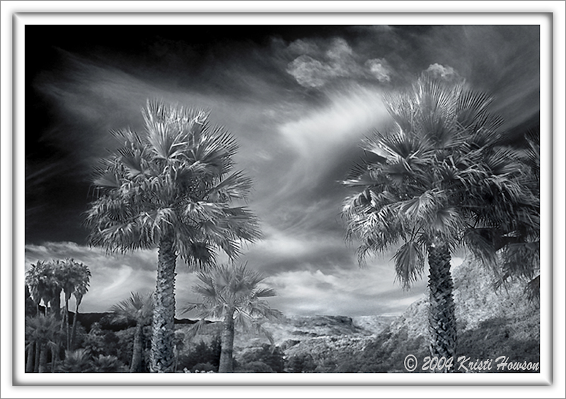 Valley Of The Palms