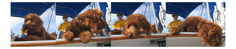 Patty, the 8-month-old Goldendoodle, enjoys her first day on a boat.