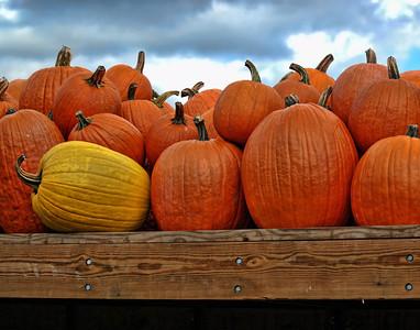Pumpkin Delivery