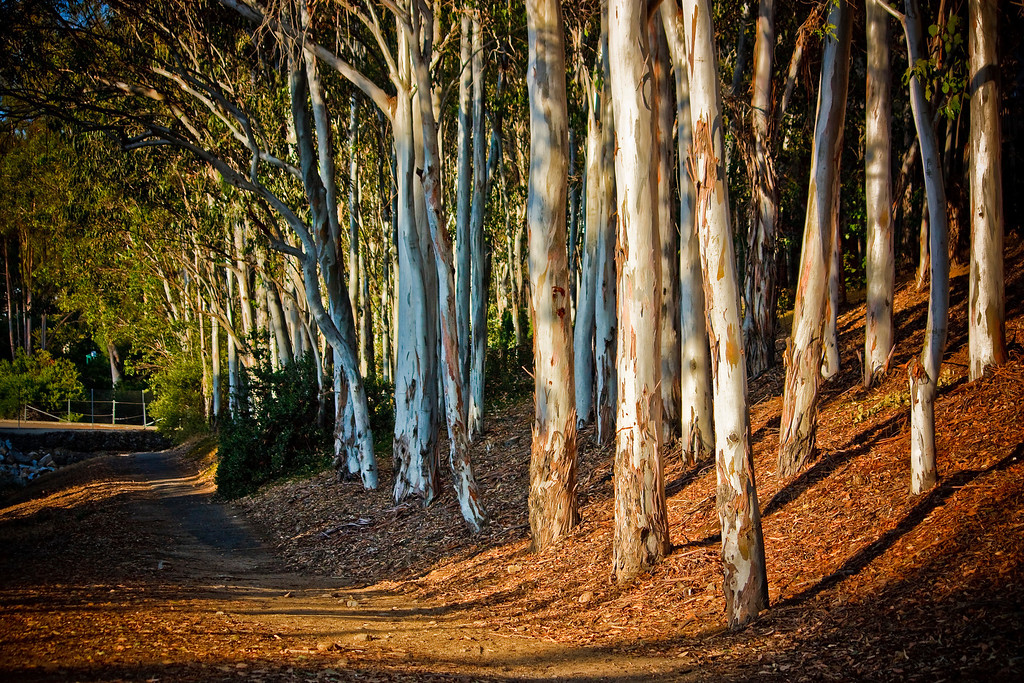 Title: Wooded Path<br /> 1st Place photo representing the month of November 2010 in the Lake Forest City Calendar.