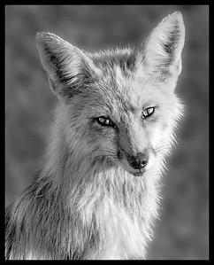 Jean McManus, 1st Honourable Mention, Animals