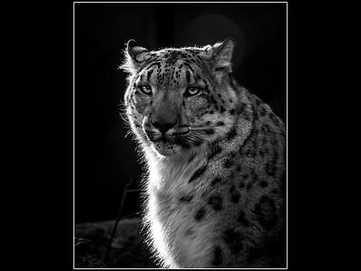 Jordan Nepon, Animals
