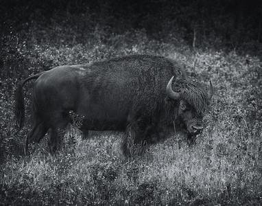 Lynn Latozke, Animals