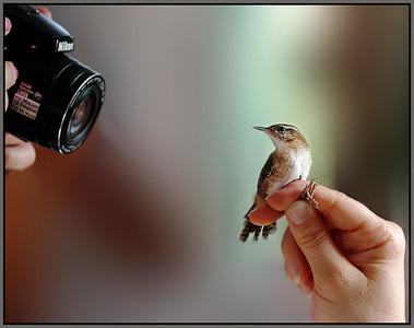 Bird Banding Model