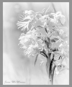 Jean McManus - Senior Monochrome Print