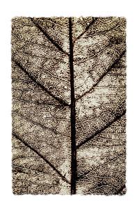 Keith Putt - Senior Monochrome Print