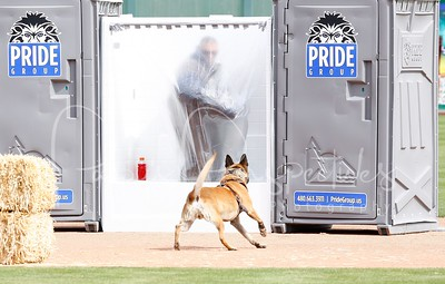 2014 Desert Dog Police K9 Trials (Scottsdale, AZ.)