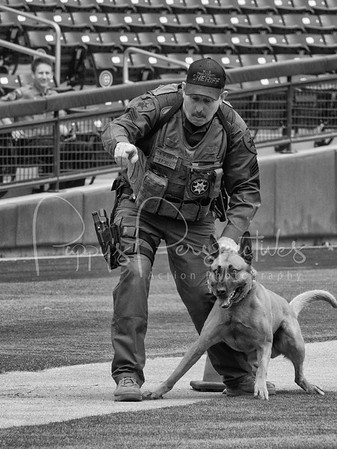 2017 Desert Dog Police K9 Trials (Mesa, AZ.)