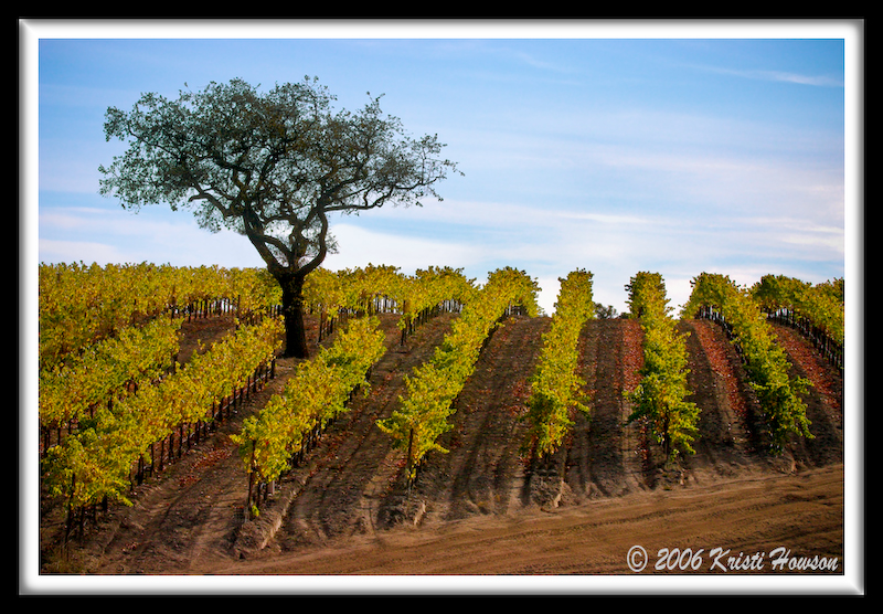 Zaca Vineyards