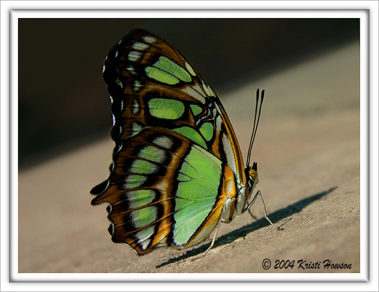 """Waiting For My Wings To Dry (Young Baby """"BF"""" """"DIMalachite)"""