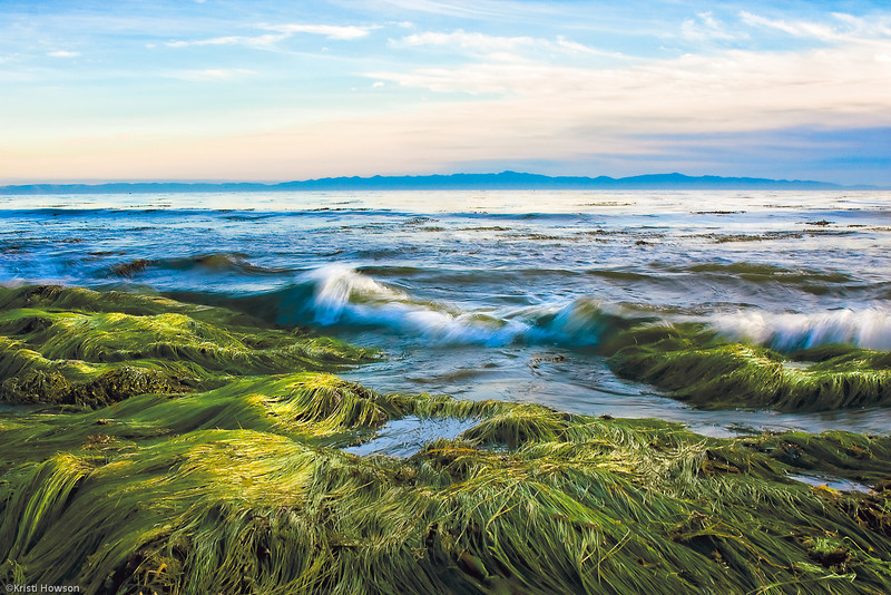 Eelgrass At Low Tide<br /> 1rst Place, Digital/Ocean