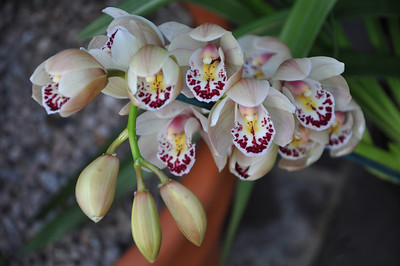 Ken Kinsley  - Orchid