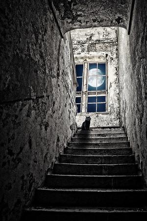 SteveH Moonlightshadows
