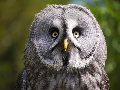 Rita Giblin Owl