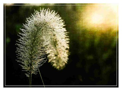 2019_02_26_O_01_The Glory of Morning_post jpeg