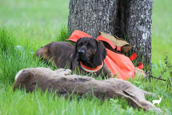 Cecima Deer Tracking Trial 2018