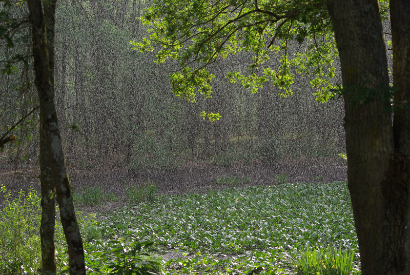 Weather: Rain caught against the light at the Etang de Levrys near Nouan in the Solange area of central France.