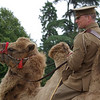 People. Wrest in War, August 2012. A WW1 re-enactment day. During this time, the house was used as a recuperation hospital, and a camel was brought in to help speed recovery!