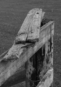 User: vonbonds Title: Rotting Wood  Rotting wood nailed to the top of an old fence for seemingly no reason.