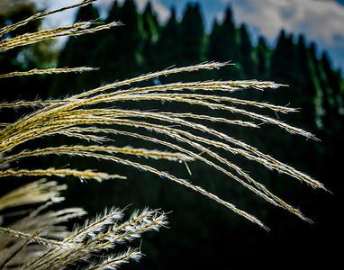 2. Grassy Leaves