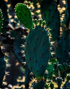 9. Cactus Aglow