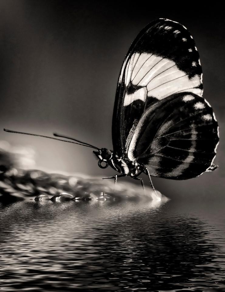 5 Butterfly on Island
