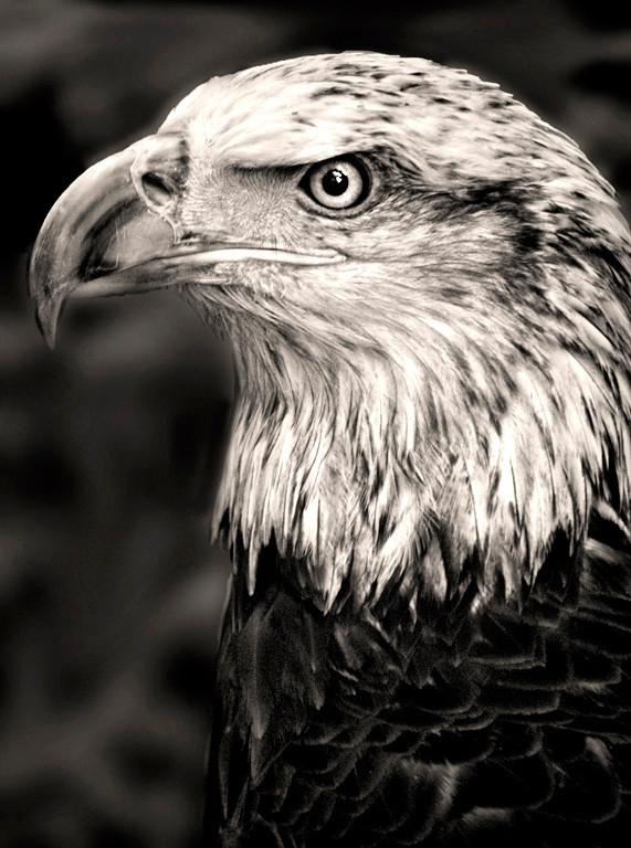 10 Eagle Eye