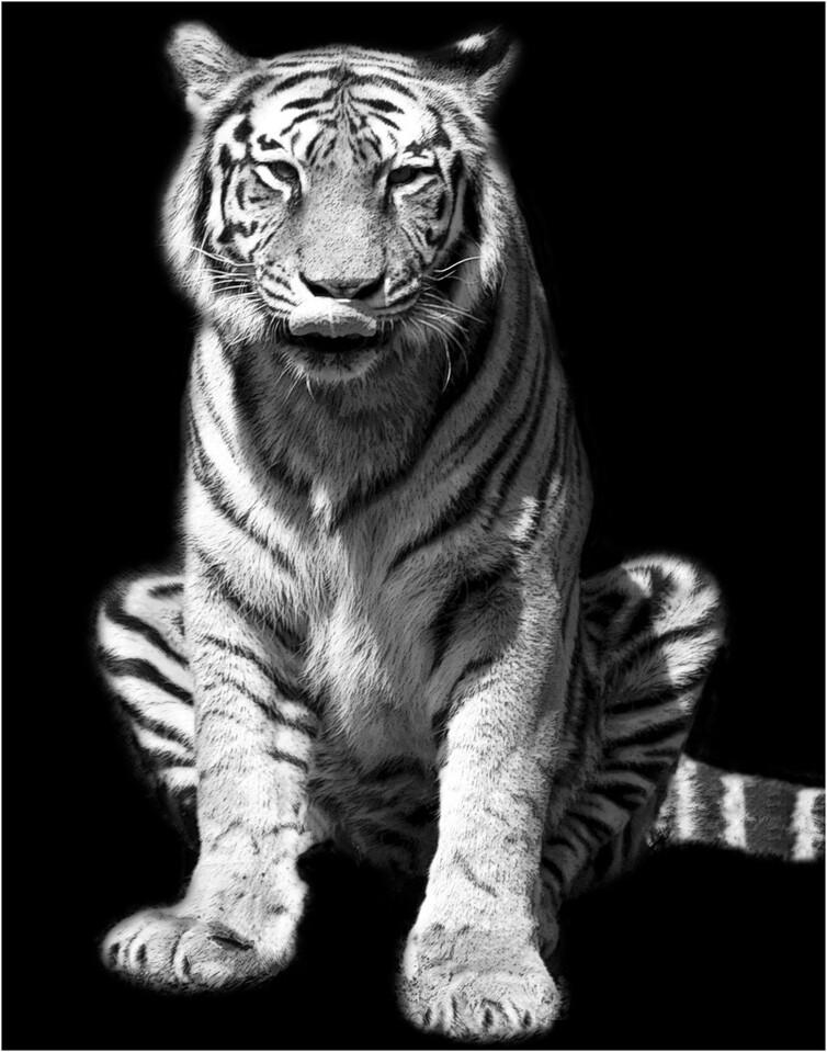 2 Tony The Tiger