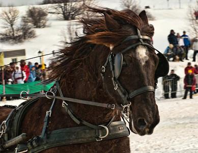 7 Racing Horse
